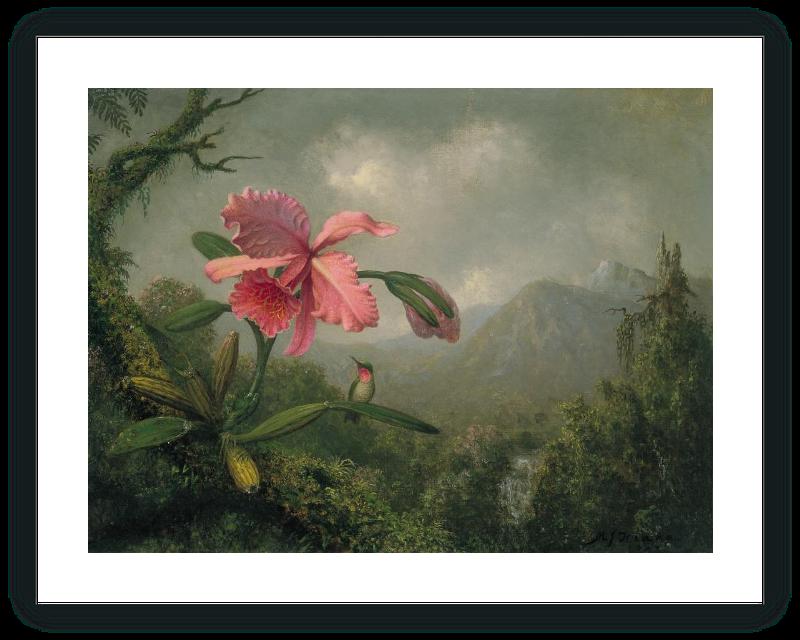 zoom Orquídea y colibrí cerca de una cascada de montaña