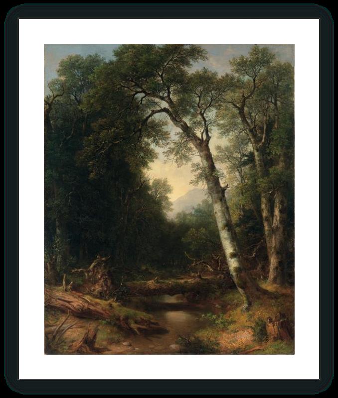 Un arroyo en el bosque