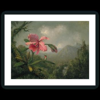 Orquídea y colibrí cerca de una cascada de montaña