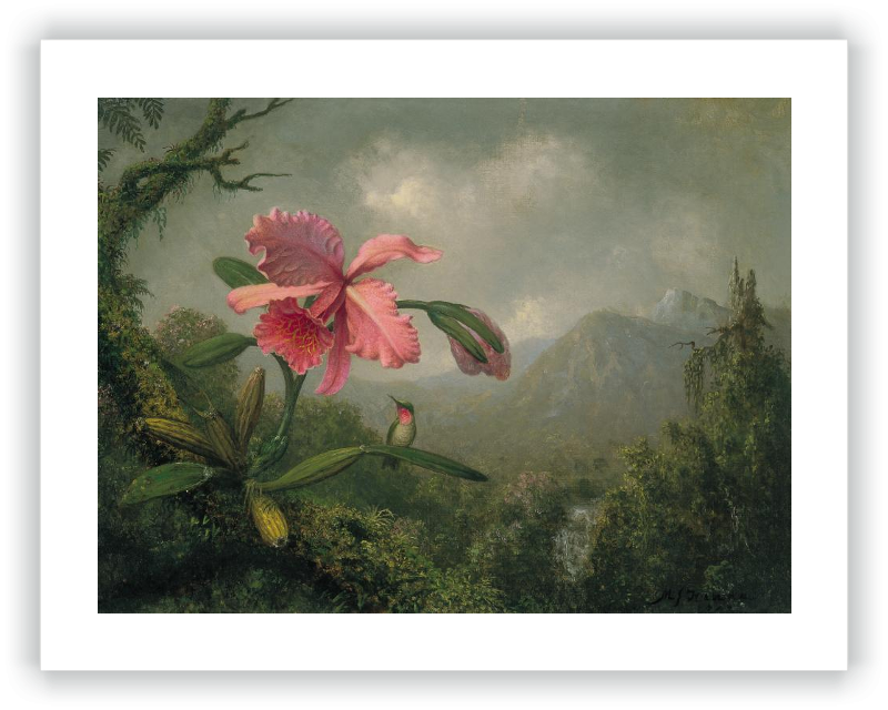 zoom Orchid and Hummingbird near a Mountain Waterfall