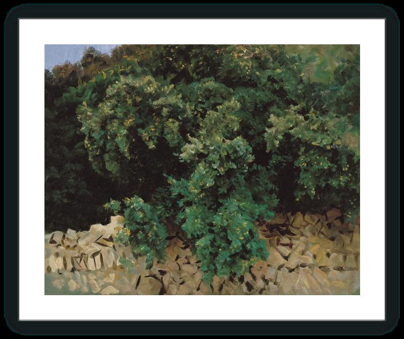 zoom Ilex Wood. Majorca