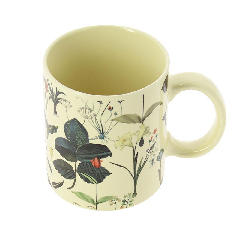 Carpaccio-Ailanto Cup